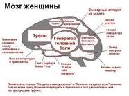как выглядит мозг женщины