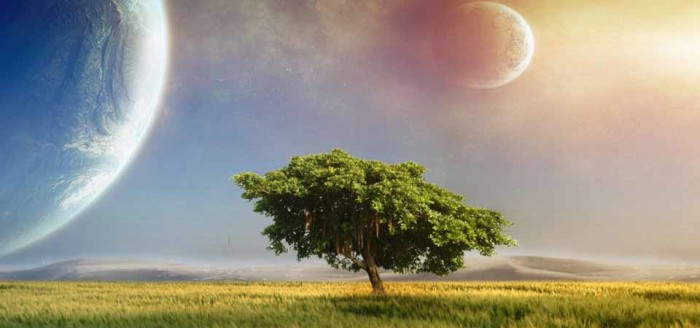 дерево_960