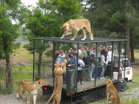 люди и львы