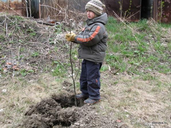 Мы садим деревья