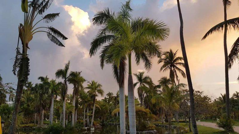Пальмы и облака