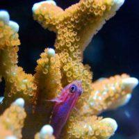 Коралловый кальций Фаберлик